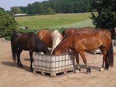 paard aan de teugel rijden